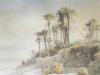 Bordighera. Palmiers