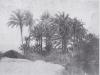 Bordighera palmeto n° 2366