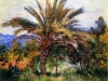 Monet 1884 palm tree at bordighera