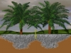modelisation-racines-1