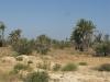 PALMERAIE paysage (1).JPG