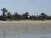 PALMERAIE paysage (3).JPG