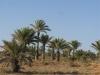 PALMERAIE paysage (5).JPG