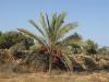 PALMERAIE paysage (6).JPG