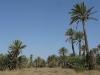 PALMERAIE paysage (7).JPG