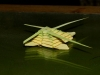 rameaux-egypte-ant-nest-elraheb