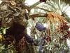 palmsunday-office-elche-procession-4