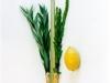 bouquet-rituel-juif-de-soukkhot-3