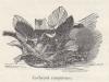 Cachepot cuopravaso 1892