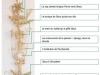 rameaux-sardaigne-oristano-0-grandpalme