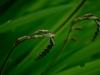 PHOENIX GARDEN Bordighera fleurs (10)