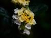 PHOENIX GARDEN Bordighera fleurs (13)
