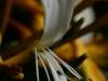 PHOENIX GARDEN Bordighera fleurs (14)