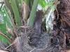 PHOENIX GARDEN nid de merle