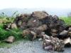 cian-dinnamurai-discarica-palme-infestate-2