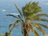 Palmiculture Dactylifera Bordighera (3)