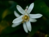 Garnier Garden collections plantes (3)