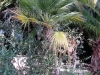 Winter Garden Bordighera collections (10)