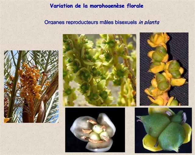 Exemples d'anomalies de la floraison