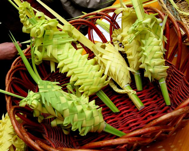 Palmes tressées (Bordighera)