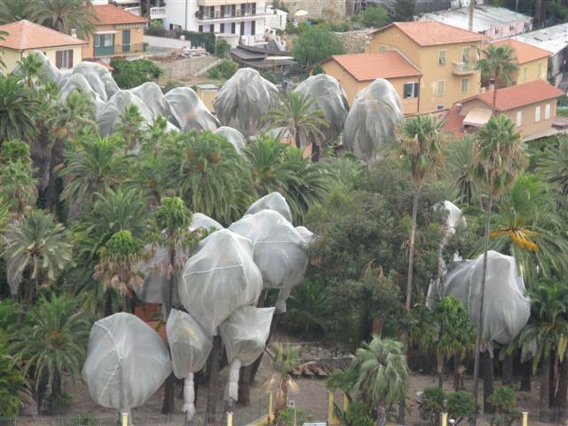 Traitement préventif au Jardin Winter (Bordighera)