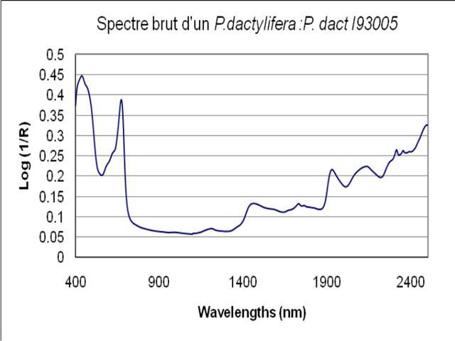 Spectre brut obtenu par SPIR