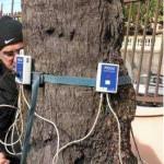 Evaluation de la stabilité des palmiers