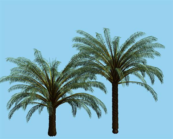 Diespalmarum palmiers_EBRAE-ROMANA
