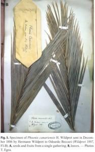 Canariensis Herbarium Wildpret