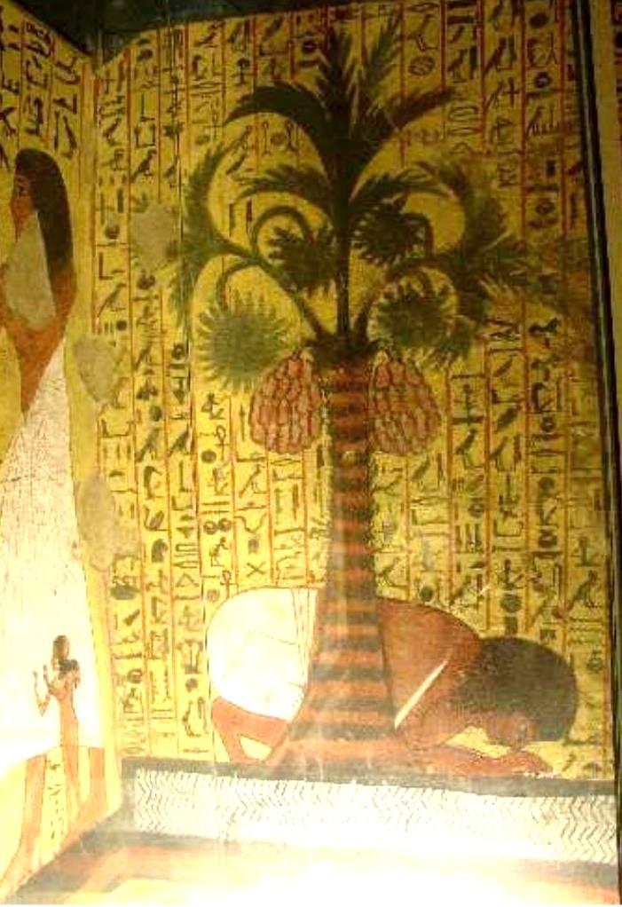 Egypte Palmier Doum Tombe de Pachedou
