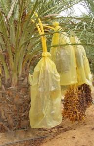 Ghardaia Algeria