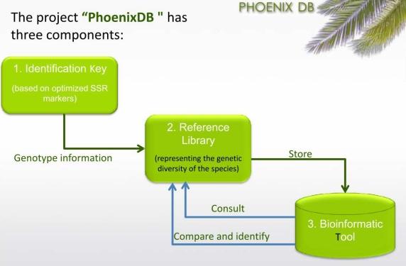 Phoenix DB