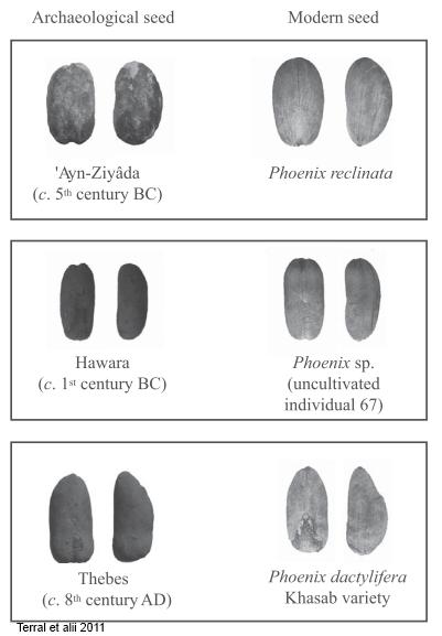 seeds archeology
