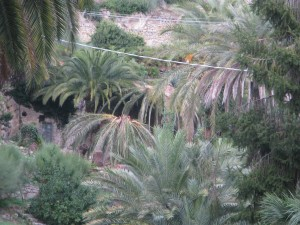 Bordighera RPW in historical palm-garden 2013