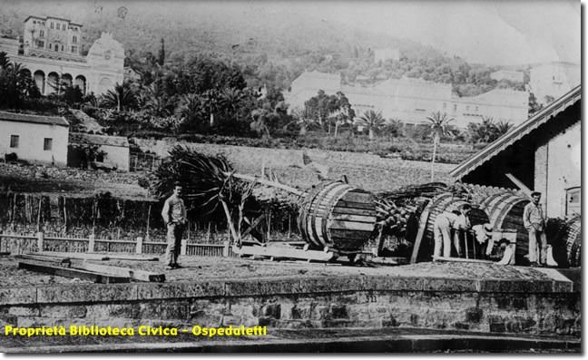 Commerce Expédition de palmiers à Rome Ospedaletti 1906
