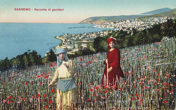 Floriculture San Remo oeillets