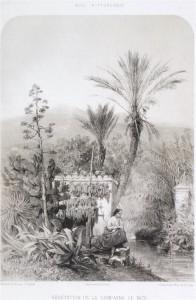 Végétation de la campagne de Nice Lithographie Guiaud 1859 in Nice pittoresque
