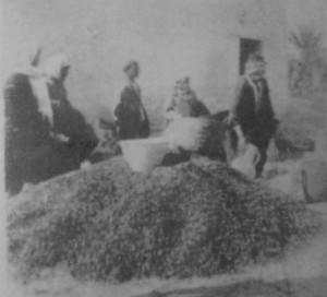 Ecologie Kerkena commerce des noyaux de dattes