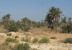 Ecologie Kerkena palmeraie ecosysteme
