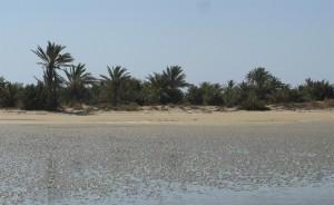 Ecologie Kerkena palmeraie panorama