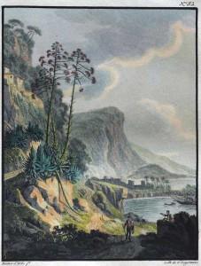 Aloes en fleurs Bacler Albe Engelmann 1819