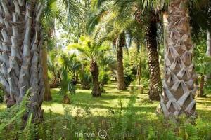Saint Jean Cap Ferrat Jardin Les Cedres Palmeraie